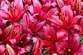 Цветок Лили.jpg
