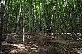 Через буковый лес - panoramio.jpg