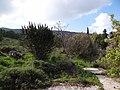 גבעת העמדות ברכס נשר ההיסטורי - שרידי רצפת ויסודות בית העם (5).jpg