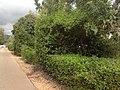 לאורך כביש 5 - מיכל מיכאלי מצלמת (8514480655).jpg