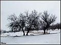 مناظر زمستانی اطراف روستای گل تپه - panoramio (3).jpg