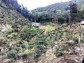 七寨-羊子额-桂山越野穿越20150228 - panoramio (63).jpg