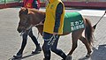 京都競馬場の交流イベントに帯同している、野間馬の「ミカン」.JPG