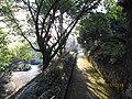 南山植物园-小径 - panoramio.jpg