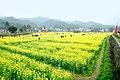 广州最美乡村—红山村 - panoramio (50).jpg