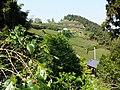 梅芳茶園 Meifang Tea Plantation - panoramio.jpg