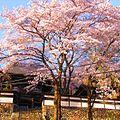 海禅寺-桜-01 - panoramio.jpg