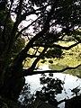 牧之原市地頭方にある池 - panoramio.jpg