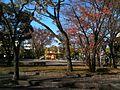 田島団地の公園晩秋 - panoramio.jpg