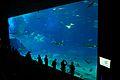 美ら海水族館 - panoramio.jpg