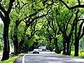 集集綠色隧道.jpg