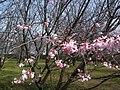 香川県丸亀市丸亀城 - panoramio (29).jpg
