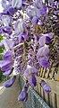 -365 wisteria lane (26102055353).jpg