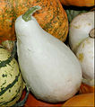 - Pumpkins - detail 1.jpg