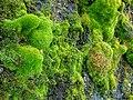 04-1233-moss.jpg