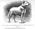 1875-esquimaux-dogs 03.jpg