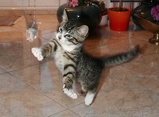 В здании парламента Армении спасли котенка