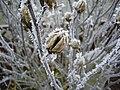 2011-01-31 Frost Berlin 06.jpg