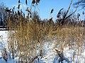 2012 'Seegfrörni' - Pfäffikersee - Strandbad Auslikon 2012-02-12 15-04-01 (SX230).JPG