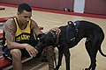 2015 Department Of Defense Warrior Games 150614-A-ZO287-184.jpg