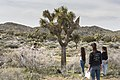 2017 Student Summit on Climate Change - Joshua tree Monitoring Project - Students measure the width of a Joshua tree's reach (33365634681).jpg