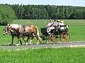21te Rammenauer Schlossrundfahrt der Pferdegespanne (026).jpg