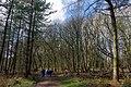 25.3.16 Delamere Forest 16 (26034357775).jpg