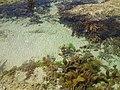 250 Ocean Beach Rd, Sorrento VIC 3943, Australia - panoramio (2).jpg