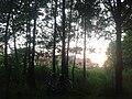 2645 Delfgauw, Netherlands - panoramio (1).jpg
