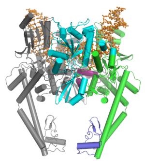 Type II topoisomerase