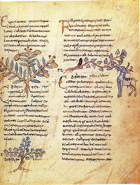 Erbario di Dioscoride del X secolo