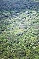 Aérea de bosque - panoramio.jpg