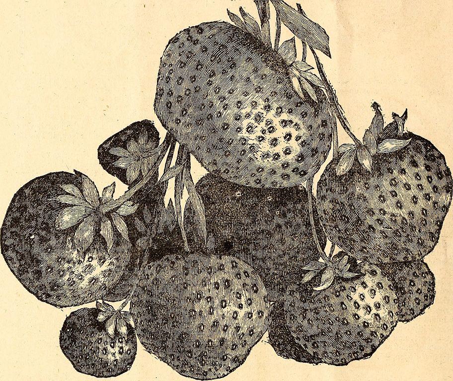 Ornamental trees ornamental shrubs 18161575532 jpg wikimedia