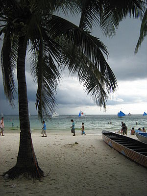 Coconut production in the Philippines - A coconut tree on the island of Boracay.