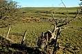 A Marshy Pool - geograph.org.uk - 1708685.jpg