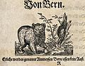A bear playing with soil near a tree trunk. Woodcut. Wellcome V0021326EL.jpg