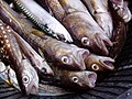A bucket of fish - by Mats Hagwall.jpg