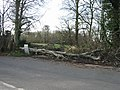 A casualty of the recent high winds - geograph.org.uk - 675162.jpg