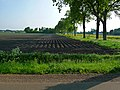 A fresh-prepared agriculture field for crops in Drenthe - North Netherlands, May 2012.jpg