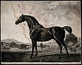 A horse in the countryside Wellcome V0048115.jpg