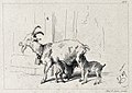 A nanny goat with its two kids. Etching by C. G. Lewis after Wellcome V0020830.jpg