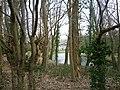 Aarschot Gelrode Nieuwland 6 1 (2) - 161260 - onroerenderfgoed.jpg