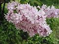 Ab plant 516.jpg