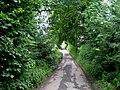 Access Lane to Newton Grange - geograph.org.uk - 491676.jpg