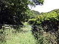 Access to the woods - geograph.org.uk - 520593.jpg