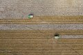 Aerial view of two cotton harvester making horizontal stripes in Batesville, Texas field.jpg