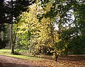 Afternoon sunshine on autumn leaves at Westonbirt arboretum - geograph.org.uk - 1014601.jpg