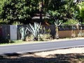 Agaves and Aloes (3799775943).jpg
