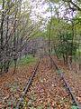 Aggertalbahn Waldstrecke Siegburg Lohmar.jpg