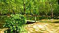 Agios Nikolaos Park, Naousa.jpg